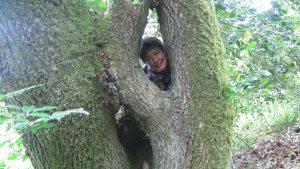 Formation en ligne sur les arbres maîtres