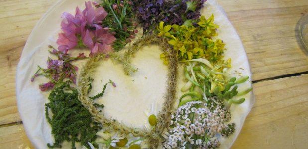 Stages découverte et cuisine des plantes sauvages