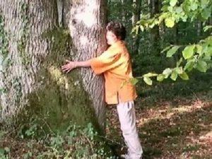 Stage se relier à un arbre