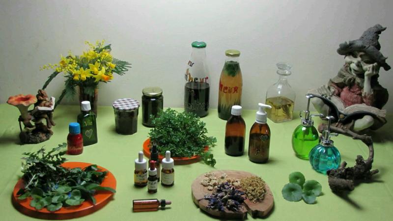 Formation en vid o sur les plantes sauvages m dicinales et for Recherche sur les plantes