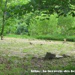 La roue celtique des arbres
