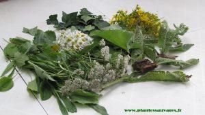 decouverte-plantes-sauvages