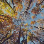 pouvoir thérapeutique des arbres