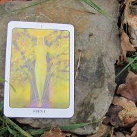La roue des arbres celtiques : le frêne