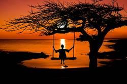 la sylvothérapie et ses bienfaits