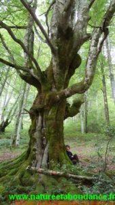 Les bienfaits des arbres sur notre santé