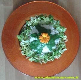 livre recettes plantes sauvages